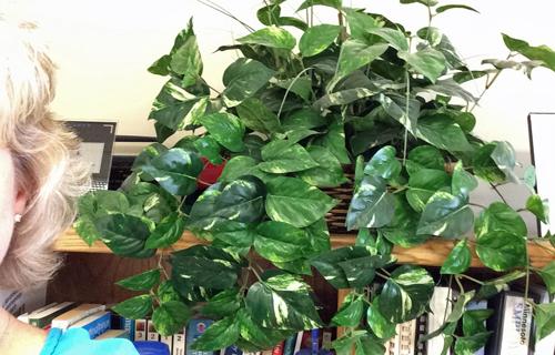 Fake-plant