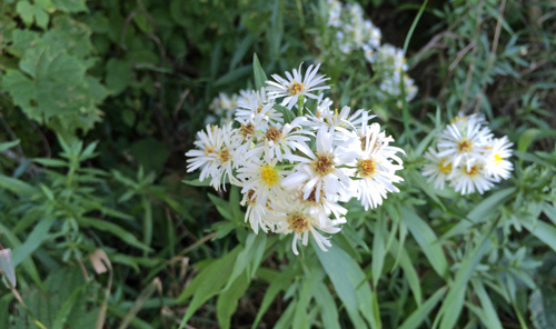 Onwalk-flowers