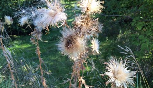 Onwalk-weeds
