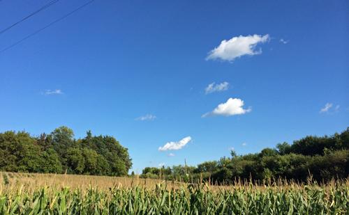 Onwalk-corn