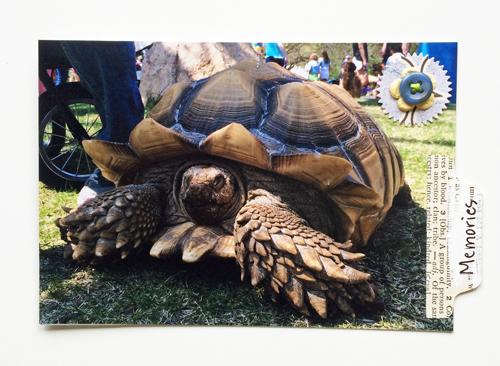 Pet-Walk-turtle
