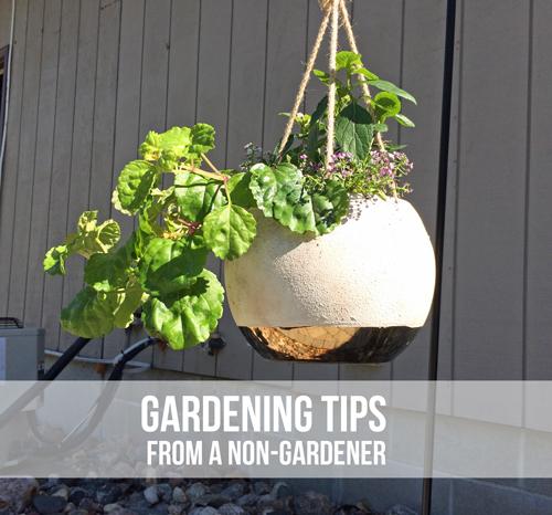 Gardening-tips-title