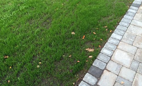 Growing-grass