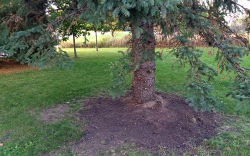 Tree-bottom